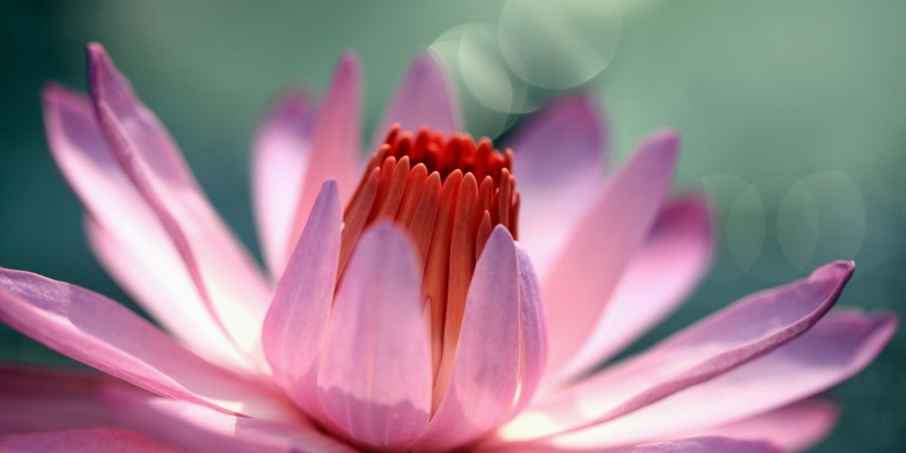 How does water lily smell? Two cosmetic from Korres of water lily flavour?